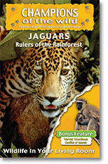 Jaguars Vervet Monkeys DVD